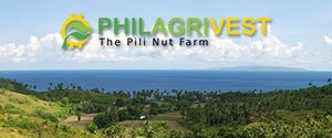 Philagrivest- The Pili Nut Farm