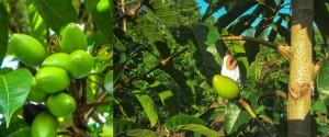 pilinuts-01